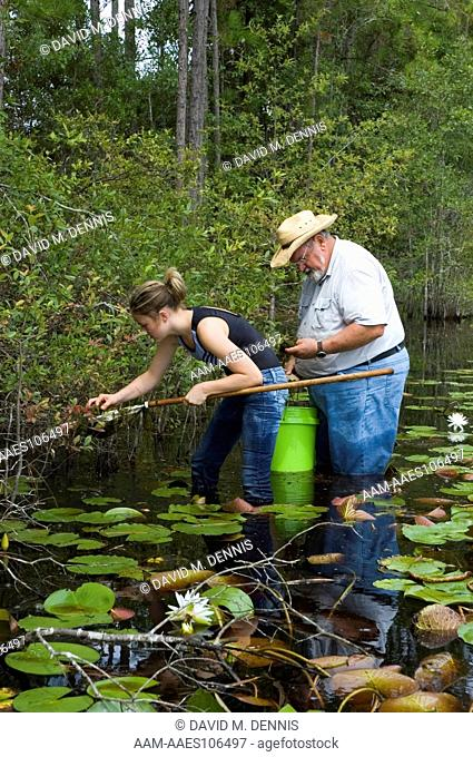 Collecting aquatic salamanders in flatwoods pond for amphibian survey, Osceola National Forest, Baker Co. FL