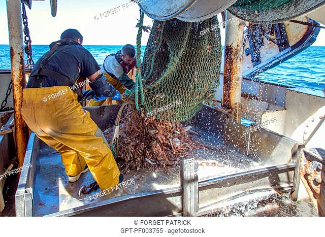 SAILORS POURING THE LIVE FISH AND PRAWNS FROM THE NETS ONTO THE SORTING TABLES, SEA FISHING ON THE SHRIMP TRAWLER 'QUENTIN-GREGOIRE' OFF THE COAST OF...