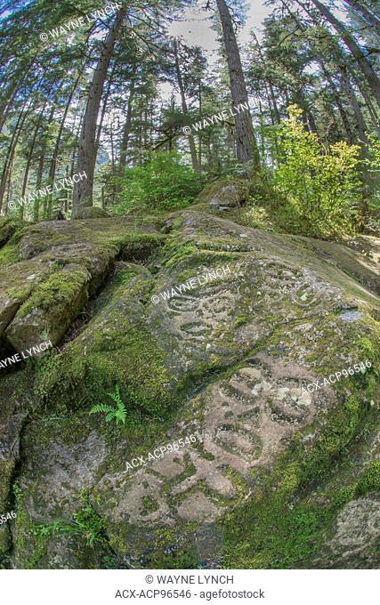 Nuxalk petroglyphs, temperate rainforest, Bella Coola, coastal British Columbia