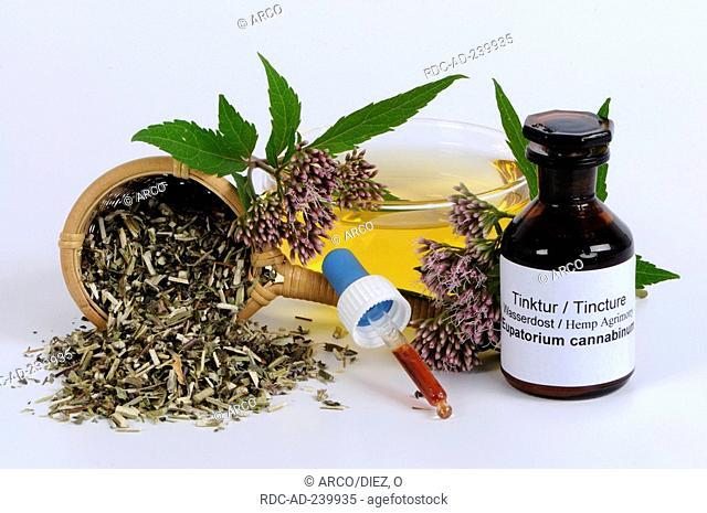 Cup of Hemp Agrimony tea and Hemp Agrimony tincture / Eupatorium cannabinum
