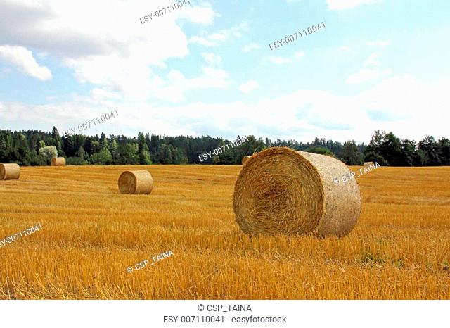 Golden field with straw bales