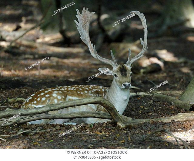 Dortmund, Eving, D-Dortmund, Ruhr area, Westphalia, North Rhine-Westphalia, NRW, D-Dortmund-Eving, Sueggel Nature Reserve, Sueggel Forest, compound