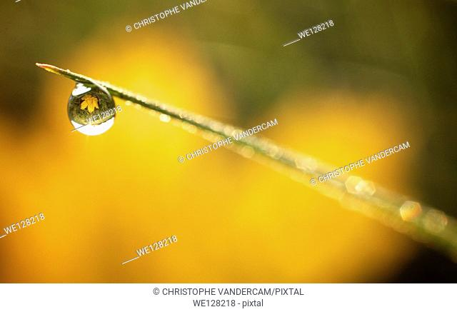 A waterdrop is reflecting an autumn leaf