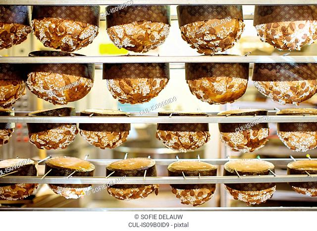 Rows of traditional Italian panettone fresh from oven