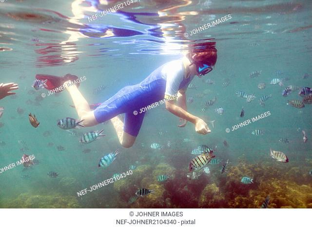 Boy swimming with fish around