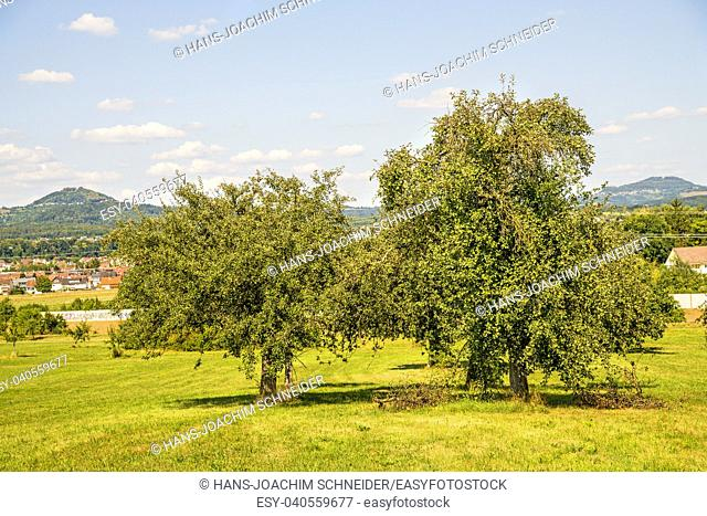 apples on a tree with german landscape in the background in Germany