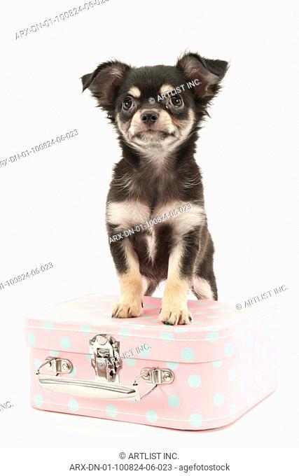 A puppy on a bag
