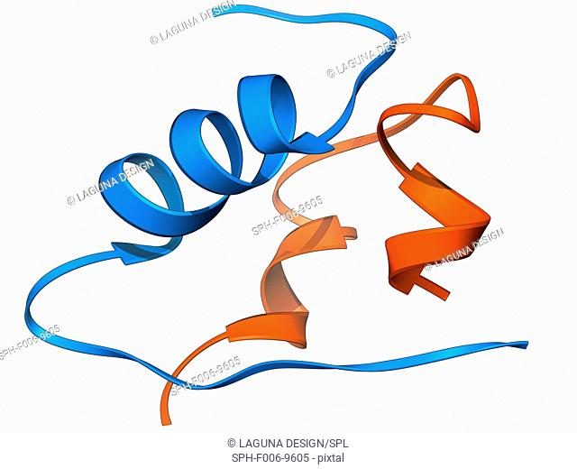 Insulin molecule. Molecular model of the hormone insulin. Insulin consists of two peptide chains, A and B, which are linked by disulphide bridges