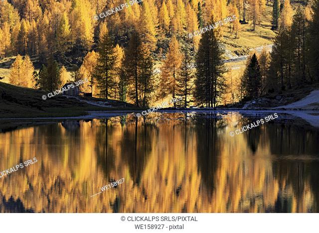 Autumn colored trees reflecting into Lago Federa, Cortina d'Ampezzo, Province of Belluno, Veneto, Italy