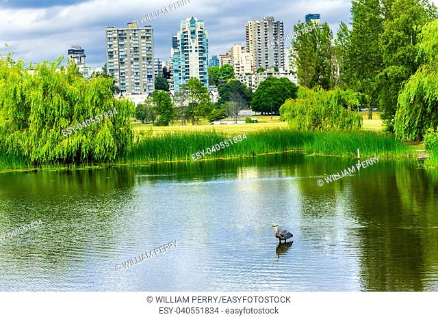 Vancouver Buildings Great Blue Heron Ardea herodias Pond Vanier Park British Columbia Canada Pacific Northwest