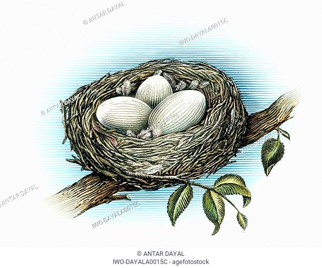 Bird's nest with three eggs