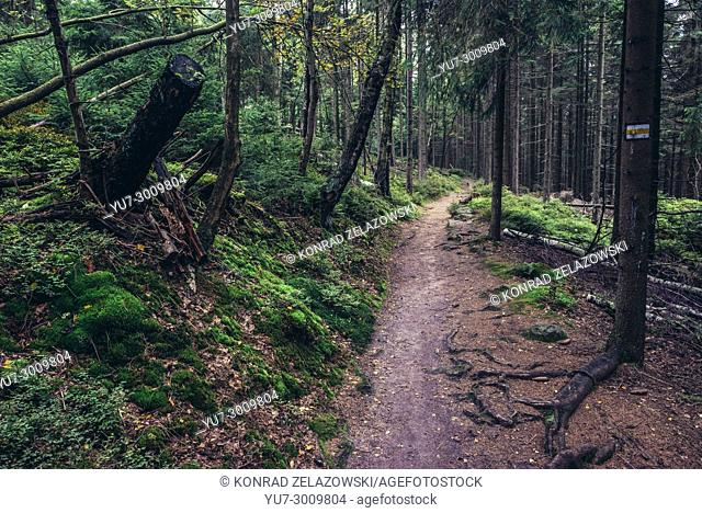 Marked tourist trail near so called White Rocks in Stolowe Mountains (Table Mountains) range, part of the Sudetes, Lower Silesia region of Poland