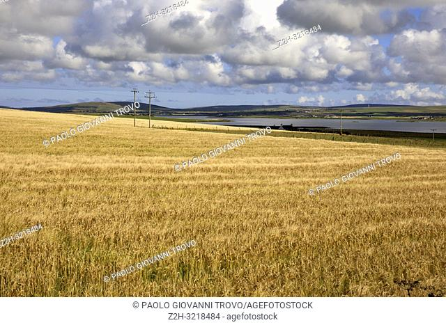 A typical landscape in the Orkney islands, Orkney, Scotland, Highlands, United Kingdom