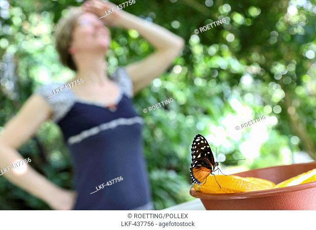 Woman looking at butterflies, Butterfly house, Botanical Garden, Leipzig, Sachsen, Deutschland