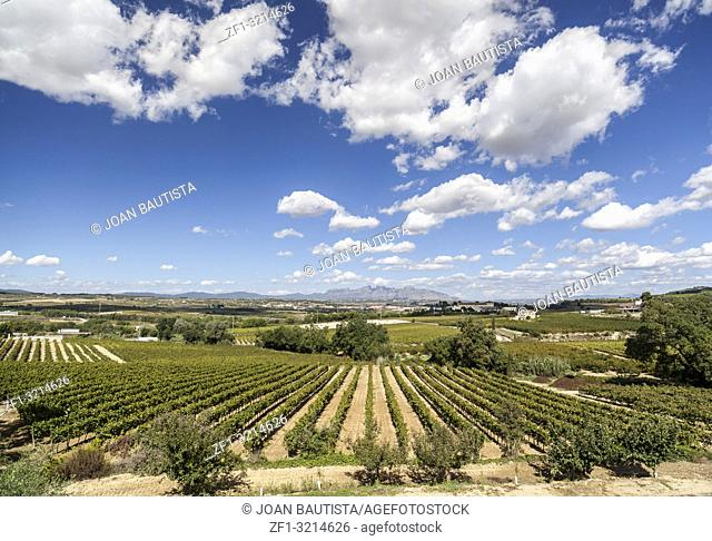 Landscape with vineyards in Penedes zone,Catalonia,Spain