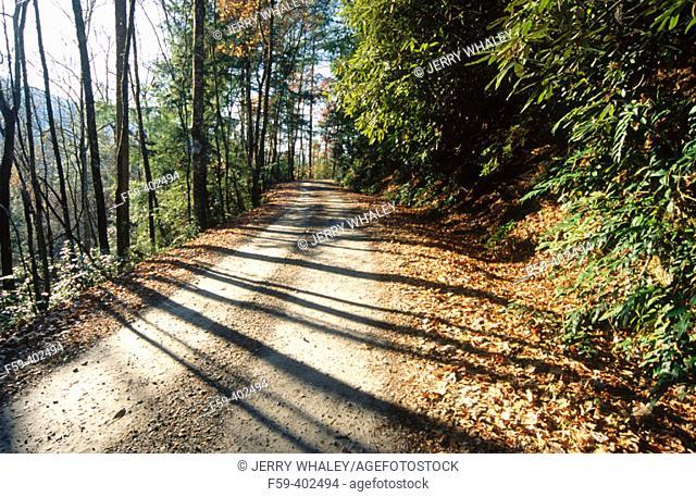 Autumn scenic, Pisgah National Forest. North Carolina, USA