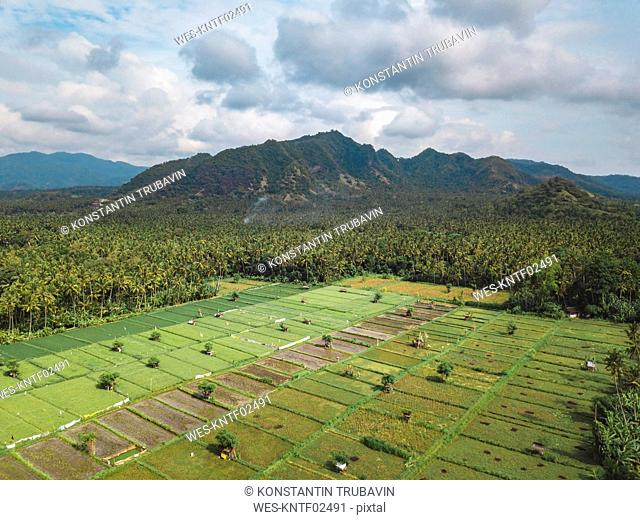 Indonesia, Bali, Candidasa, Aerial view of rice fields