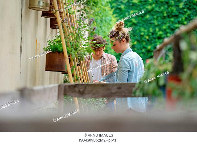 Young man and woman tending to plants growing in cans in urban garden