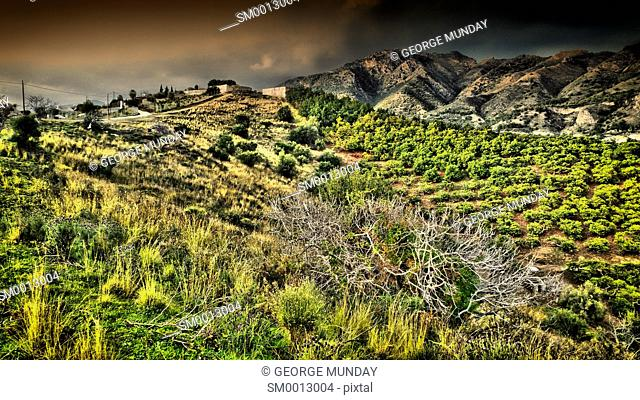 Avocado Trees near Frigilana,. Costa del Sol,. Malaga Province, Andalucia, Spain