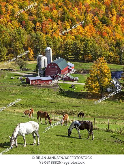 Horses grazing above a farm in autumn near West Barnet, Vermont, USA