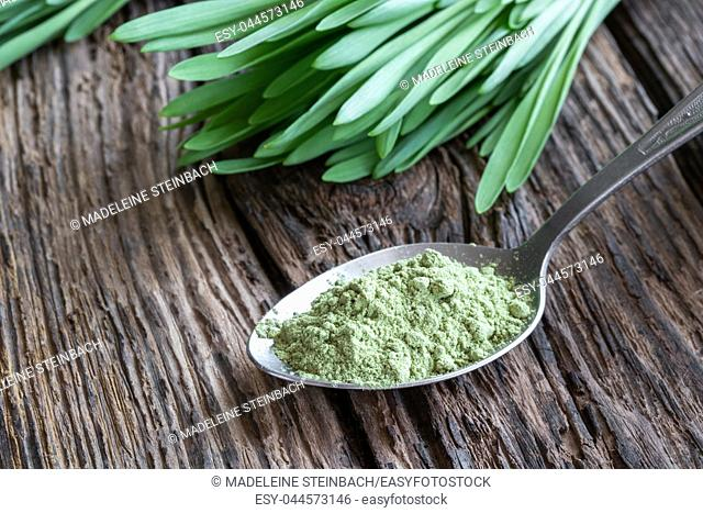 Barley grass powder on a spoon with fresh blades in the background