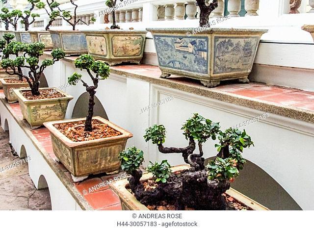 Bangkok, Buddhist temples, Temple of the Emerald Buddha, Thailand, Wat Phra Kaew, Wat Phra Si Rattana Satsadaram, bonsai trees
