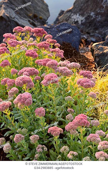 Northwestern Garden. Bellingham, Washington, USA