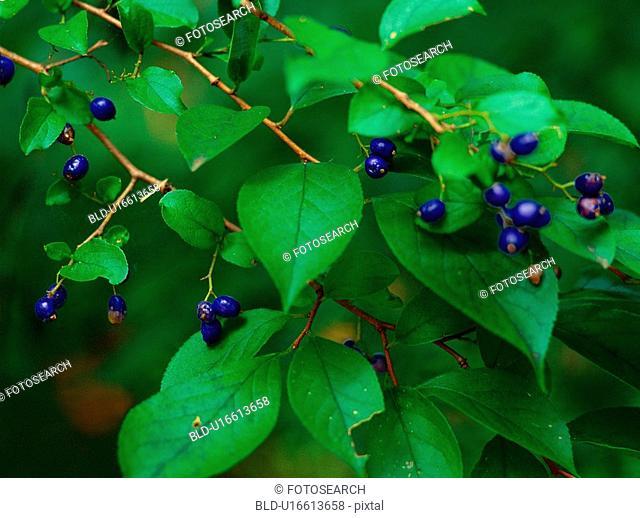 tree, plant, seed, leaf, film