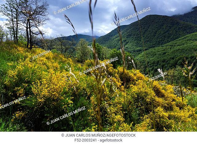Fuentes del Narcea, Degaña e Ibias Natural Park, Asturias, Spain, Europe