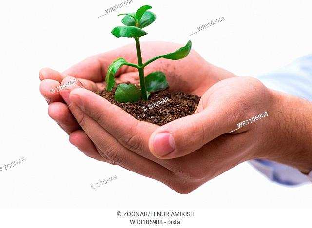 Hand holding seedling in new life concept on white