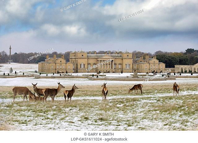 England, Norfolk, Holkham. Holkham Hall and estate after a snowfall, with deer in foreground