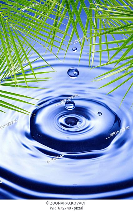 Palm leaves over water