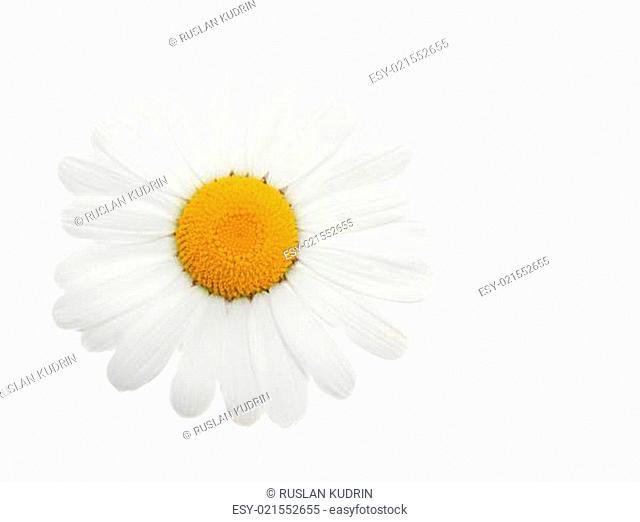 One head daisywheel