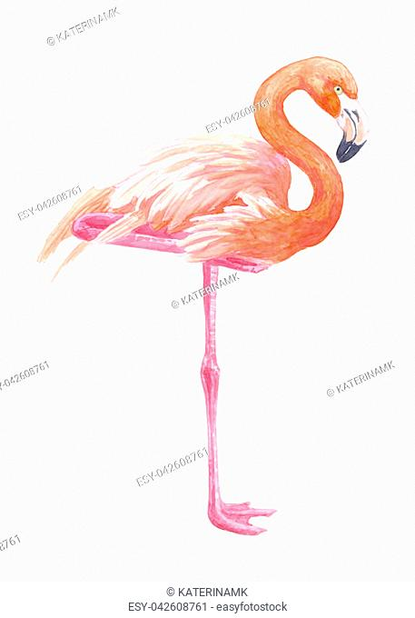 Flamingo illustration painted with watercolors isolated on white background
