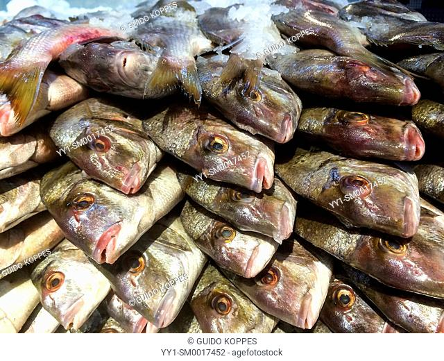 New York City, USA. Stack of fresh fish on display with ice inside a store for seafood, Roosevelt Av, Queens