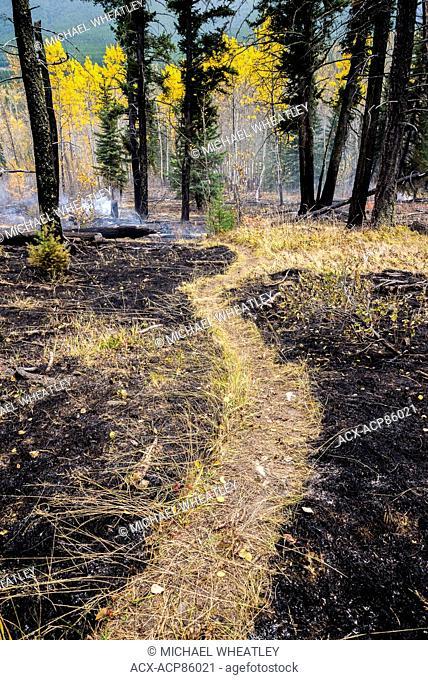 Distinctive un-burnt path through prescribed burn area, Banff National Park, Alberta, Canada