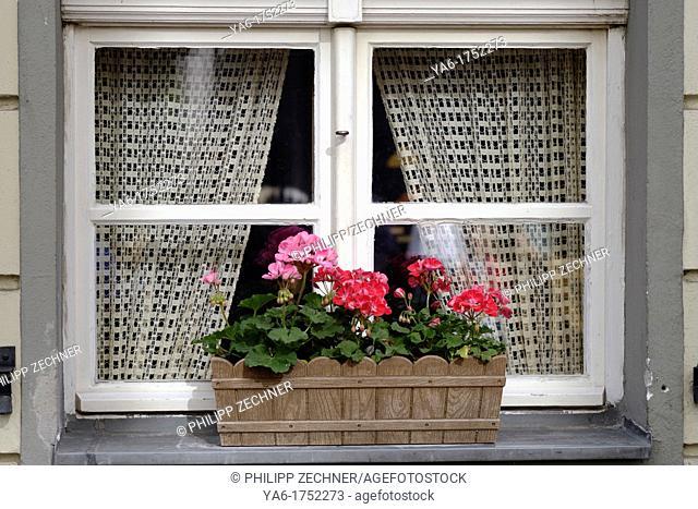 Window box in Nikolaiviertel, Berlin