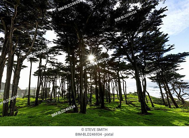 Sunbeams through trees near ocean