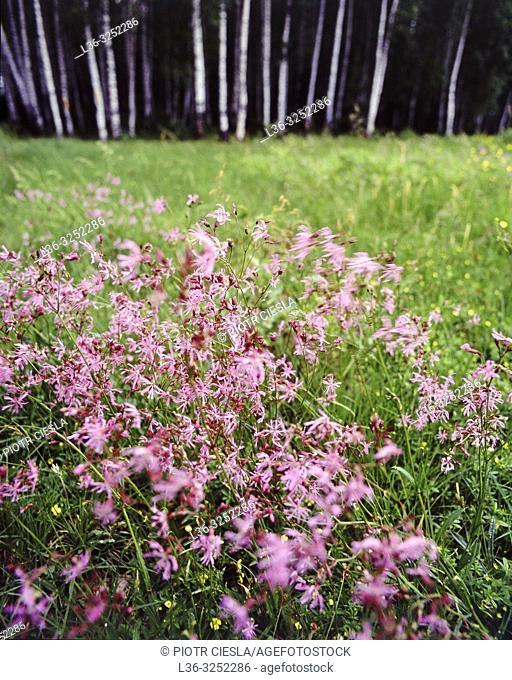 Spring meadow. Poland