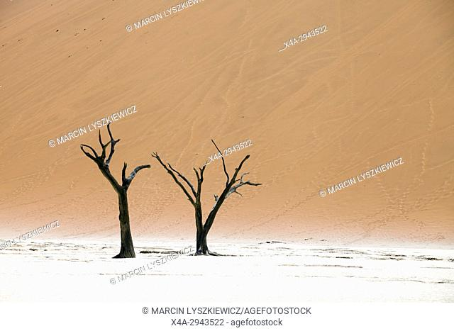 Dead trees in the salt pan of Namib desert near Soussuvlei, Namib-Naukluft National Park, Namibia