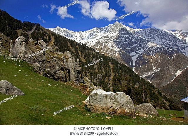 The HIMALAYAN PEAK of TRIUND above Dharamkot and the British Hill station of MCLEOD GANJ, India, Dharamsala