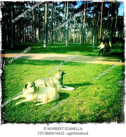 Europe. France. Ile-de-France. Paris. Bois de Boulogne. Two dogs lying in a park