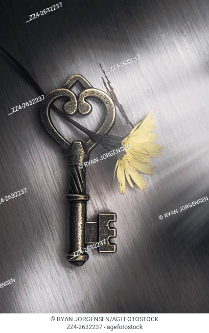 Close-up of vintage heart shaped metal key with yellow flower on wooden background. From above