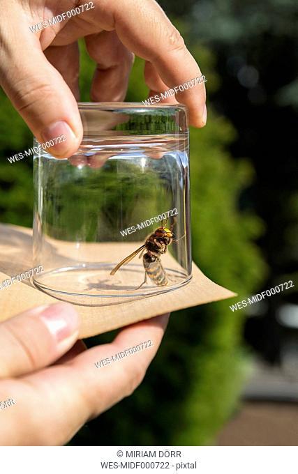 Man releasing an hornet