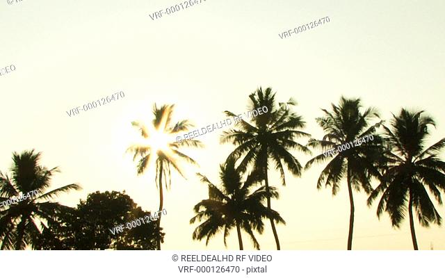 PAN, WS, Sun shining trough palm trees, Kerala, India
