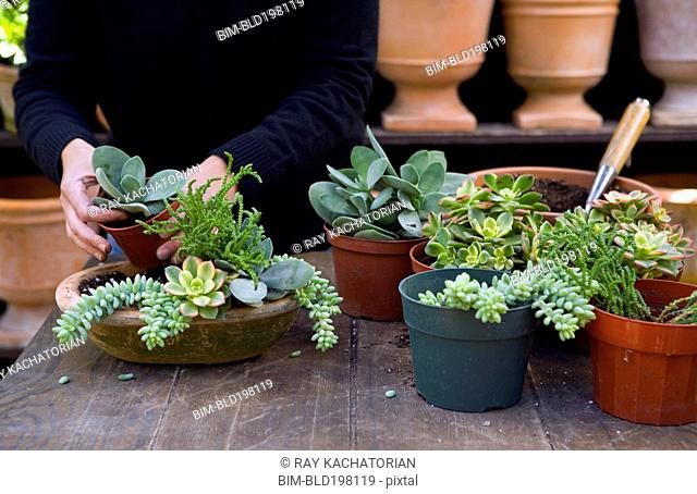 Person putting plants into pot