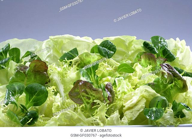 Mix of lettuces