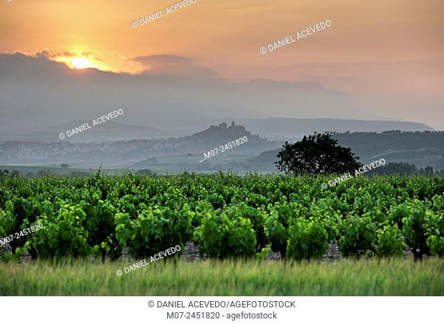San Vicente wine region at sunrise in Rioja wine region, Spain, Europe
