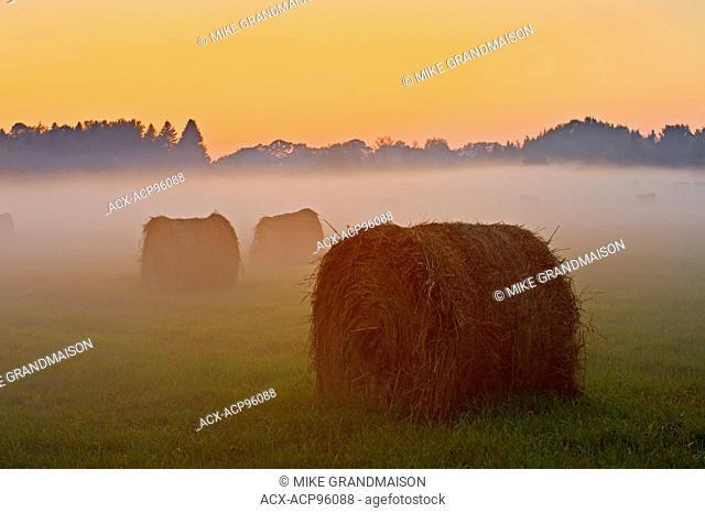 Bales and fog at twilight Near Espanola Ontario Canada