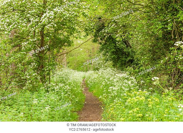 The old railway line walk in Broome , Bungay , Suffolk , England , Britain , Uk